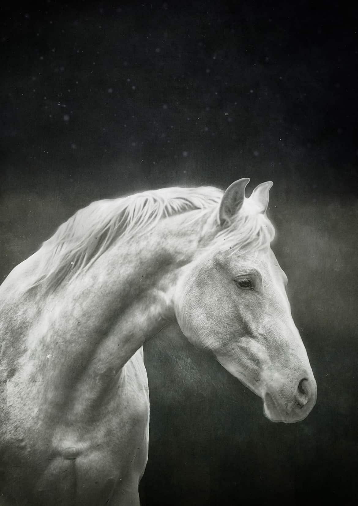 White horse annica mari@0,3x